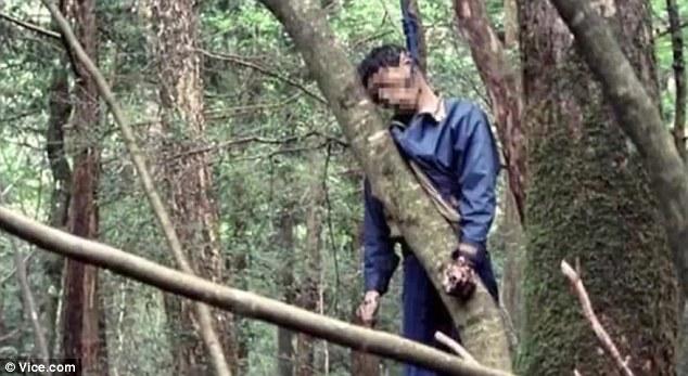 富士山自殺森林︰每年發現百具尸體 腐尸掛樹(組圖)