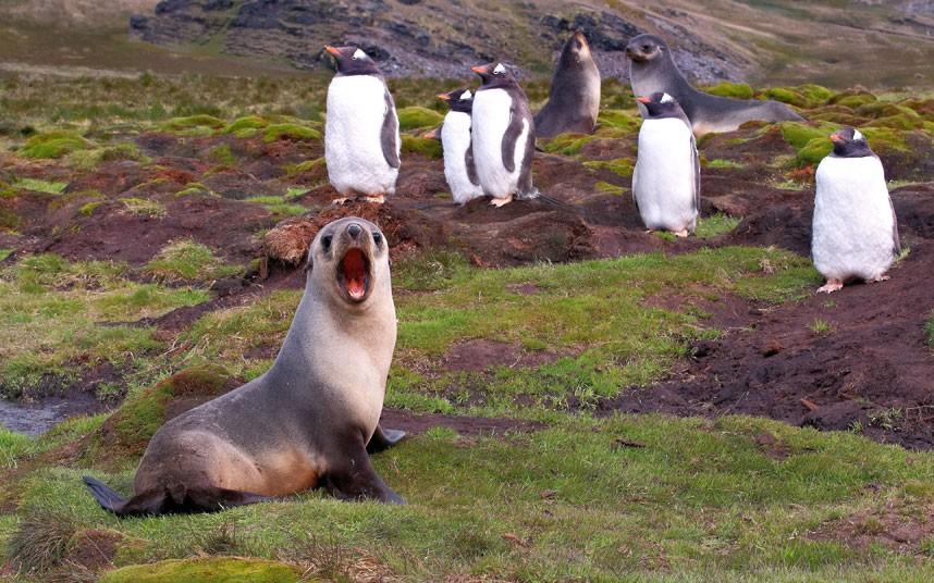 萌翻众人!镜头下野生动物可爱表情秀 - 班卓安迪 - BanjoElena—班卓埃琳娜国际