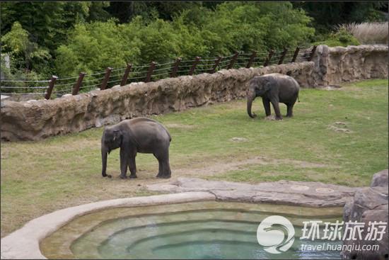 此外这座国家动物园还拥有类人猿馆,无脊椎动物展览馆,爬行动物研究