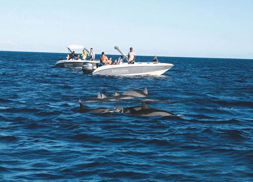 毛里求斯盛夏狂欢 出海和海豚一起畅游