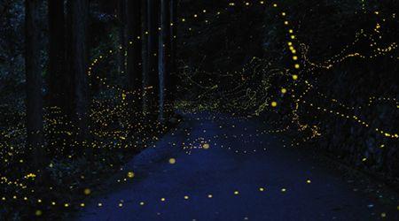 去日本长野体验萤火虫世界的神秘与浪漫