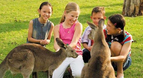澳洲乡村悠闲游 做一天真正的农庄人