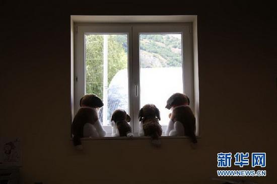 组图:走进瑞士圣伯纳犬博物馆