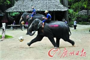 清迈美莎大象学校 体验象背上的泰北情调