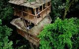 热带雨林中的幻树屋村