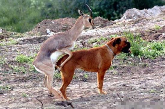 动物发情出的荒唐事