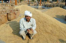 《印度教徒报》:印度香米攀越中国贸易之墙
