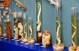 围观动物生殖器博物馆