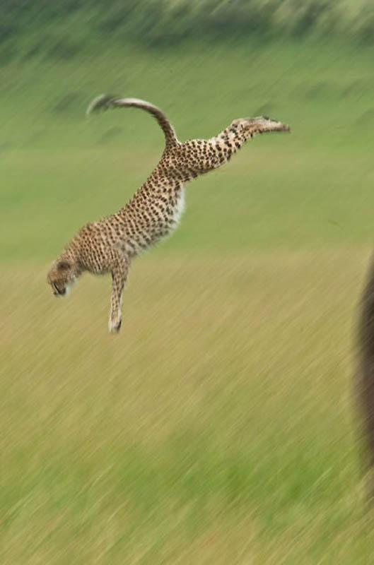 """毫秒间捕捉""""飞行""""中的动物 - 海游 - 海游的博客"""