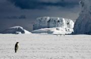 风光摄影:企鹅的一生
