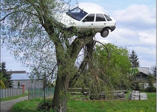男子驾驶技术烂汽车被邻居抬上树
