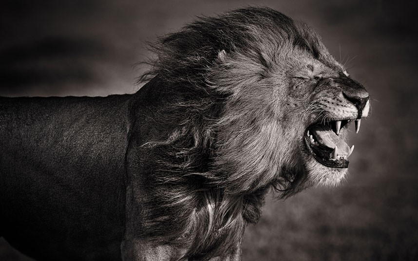 非洲野生动物黑白照