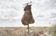 摄影项目:鸟巢的肖像