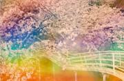风光摄影:梦幻樱花树