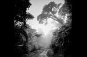 黑白风景:迷雾