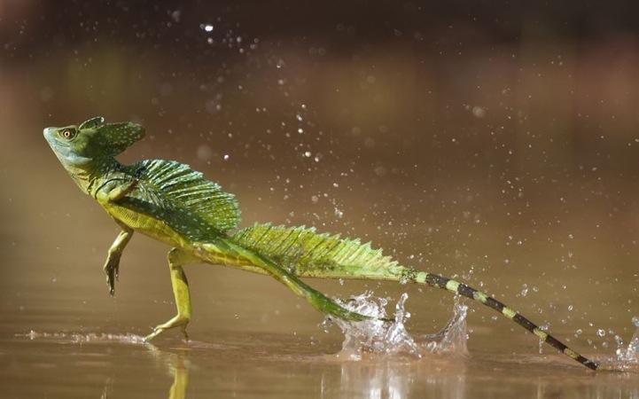 动物肖像:绝美的野生动物