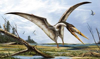 Prehistoric Birds Still Alive