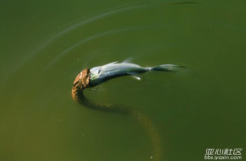 蛇的画法步骤图片