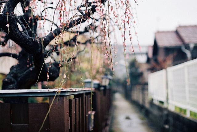 风光摄影:实例教拍日式清新照