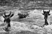 黑白风光:生死马拉河