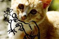 王一超:猫的狂想