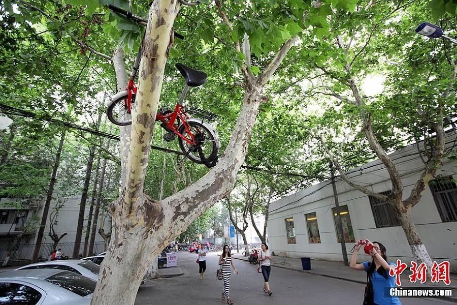 自行车上树成毕业风景