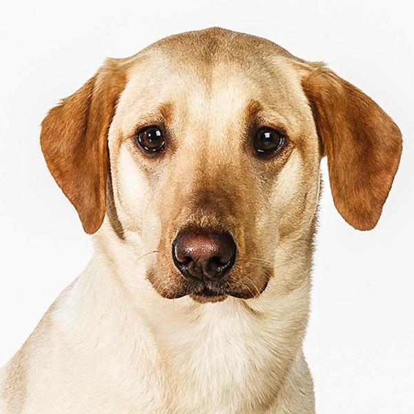 动物 > 肖像摄影:狗狗证件照
