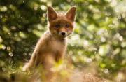动物摄影:治愈系动物