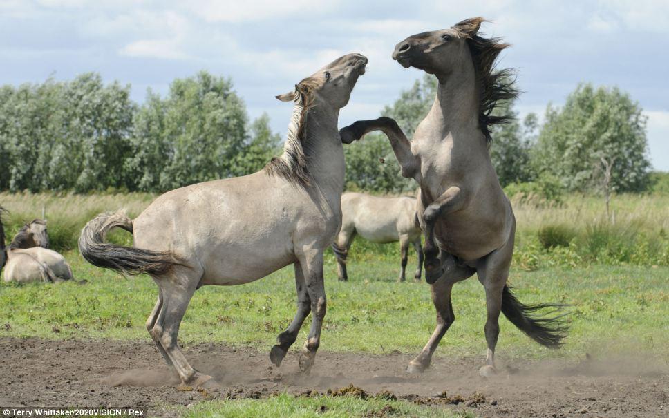 """【环球网综合报道】据《每日邮报》7月5日消息,英国的20位顶级摄影师用了20个月时间拍摄大量高质量的野生动物作品,展现英国生态系统丰富的多样性。这些摄影作品为人们呈现了一系列野生动物的精彩瞬间。   当地时间7月4日,这些野生动物摄影作品在爱丁堡皇家植物园(Edinburgh's Royal Botanic Garden)的户外画廊展出。这场展览名为""""2020Vision"""",两个""""20""""分别代表20位摄影师和20个月的户外拍摄时间。此项目是由"""