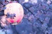 风光摄影:日之花