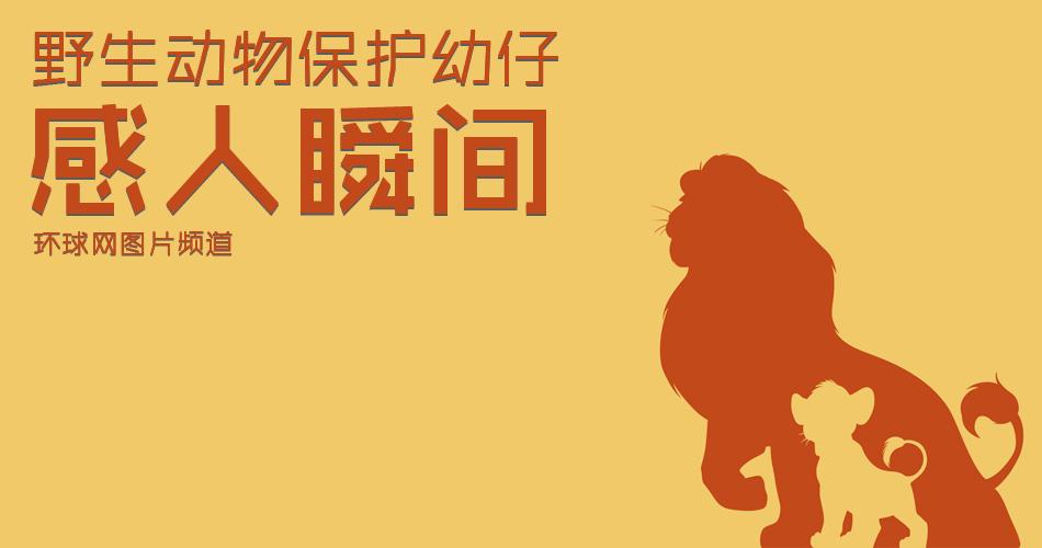 数说2018中国野生动物保护协会微信公众号
