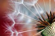 植物摄影:微距植物的纤细之美