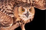 动物摄影:猛禽的非格斗状态