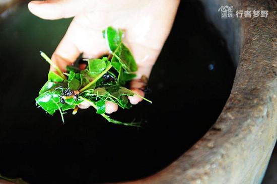 探秘亚马逊丛林深处部落的蚂蚁仪式