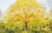 风光摄影:一棵树的灵魂