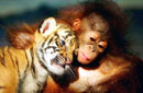 """动物世界里那些跨种族""""交情"""""""