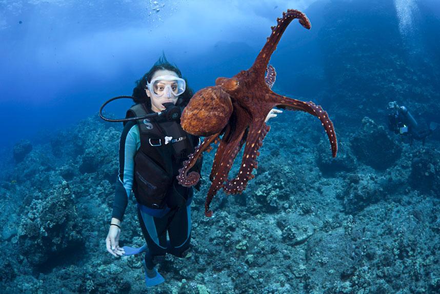 美著名摄影师David Fleetham精彩海洋生物照片 - 漂漂 - 漂漂的博客