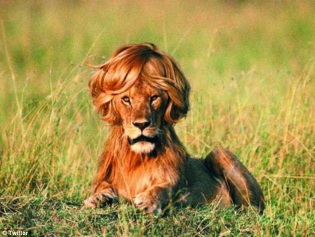 壁纸 动物 狮子 桌面 634_476