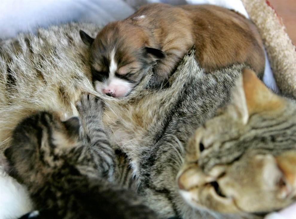 温情瞬间:动物的母爱