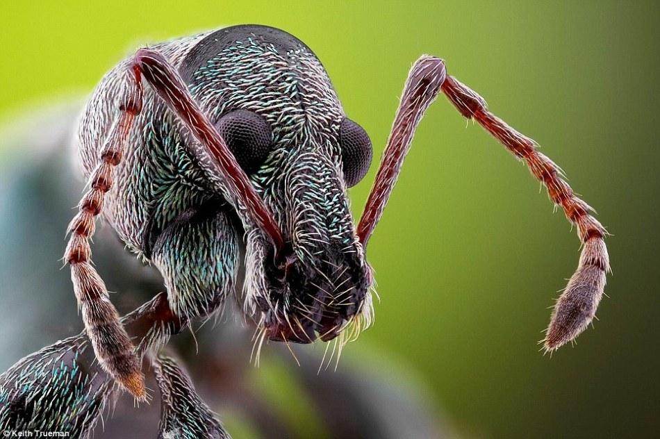 英摄影师微距摄影展示昆虫丰富细节