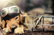 动物摄影:两只大狗