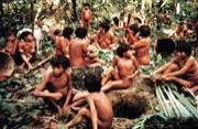 热带雨林之殇 原始部落无家可归