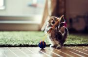 动物肖像:甜甜私房猫