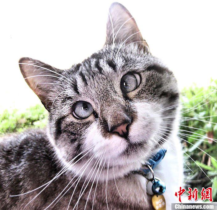 壁纸 动物 猫 猫咪 小猫 桌面 704_684