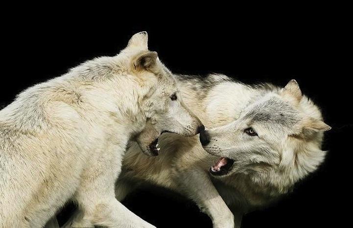 动物摄影:野生大特写