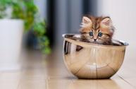 Ben Torode:甜甜私房猫