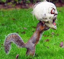 万圣节/英动物园猴子戴万圣节面具吓同伴...