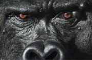 动物摄影:超人类动物