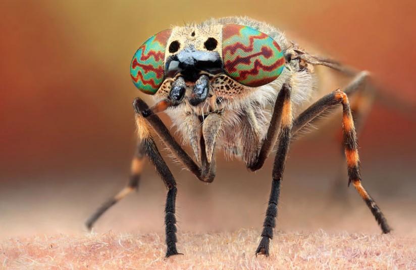 昆虫微距摄影丰富细节