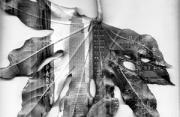 观念摄影:从树叶中看纽约